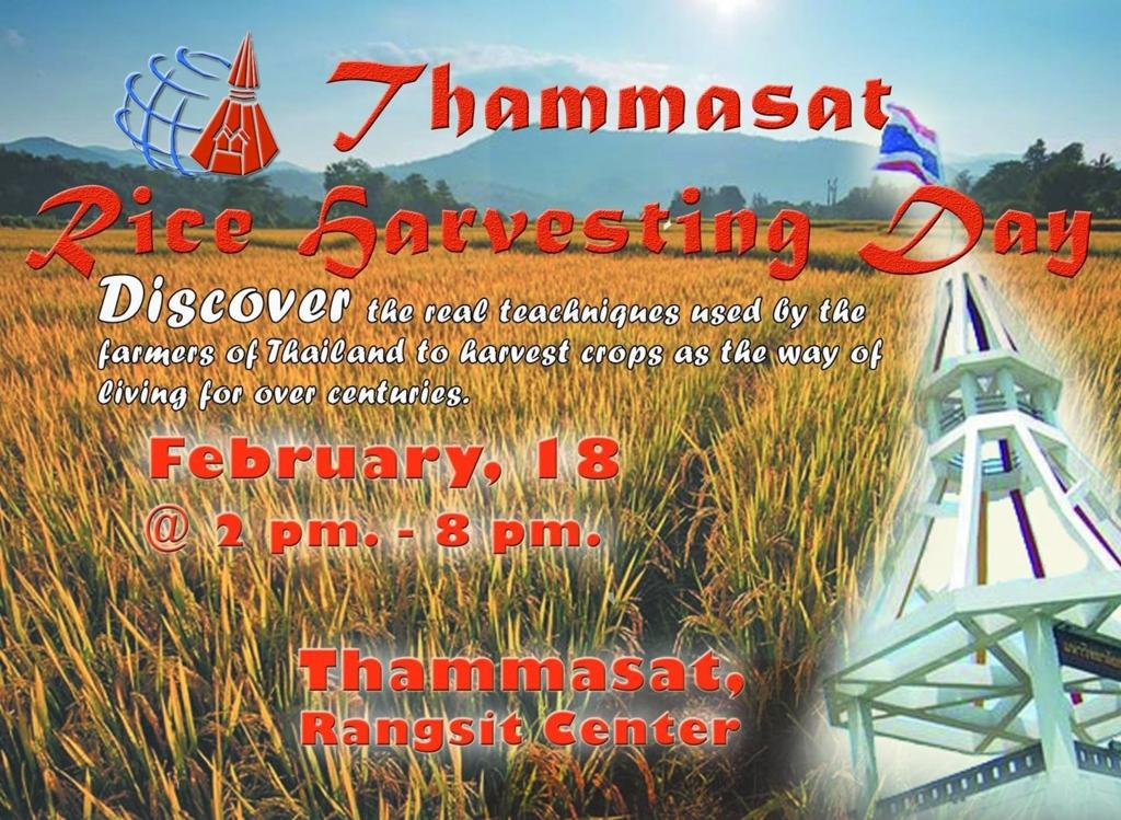【タマサート大学留学記】Rice Harvesting Dayということで命を根こそぎ刈ってきた。